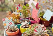 Succulent ideas and more / bringing outside in
