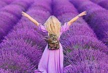 Il colore viola / Inspiration