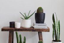 archi plante intérieur