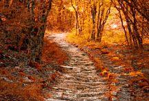 자연 / 가을