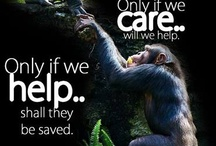 Animal Welfare / How we feel about animals. How about you?