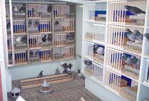 pigeon coop
