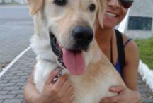 My Dogs / Zeus and Miesha Tate