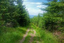 Laufen in der Natur / Bilder meiner Läufe im Erzgebirge. Viel Natur und tolle Aussichten.