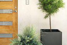 Terrace plants