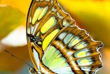 Butterflies / Mother natures beautiful art