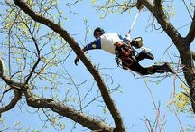 Tree Services of Omaha - Omaha, Nebraska / Tree Service in Omaha, Nebraska.  Tree health care and maintenance are extremely important to us.  We offer free estimates on tree removal, tree trimming, stump removal, and consultations on tree health care diagnosis/treatments.
