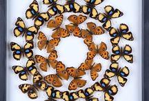 Art et papillons
