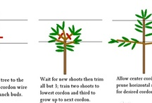 Design: Hedges and Trees
