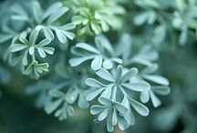 notsosecret garden / by Maureen Megan