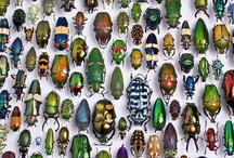 Beetles and bugs..