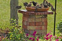 Vogel baden / vogels in de tuin  (low budget)