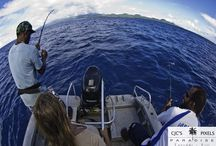 Fishing in Paradise / Paradise Taveuni has Sports Fishing adventures for the beginner or enthusiast
