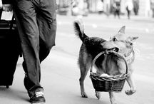 Street Photography / by 23 Photos Of