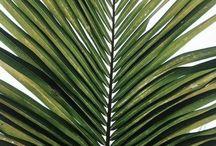 Tropical art