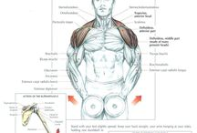+ Exercise: Shoulders