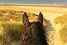 Horsey stuff