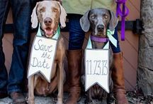 Save the Dates for Stef / Save the Date ideas that incorporate pets