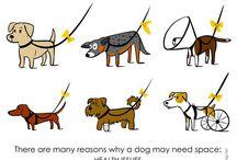 0 Dog