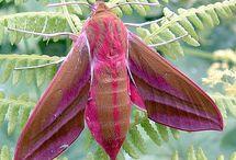 Butterflies & Moths / by Marlo Moody