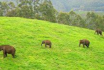 Indian Eco Park