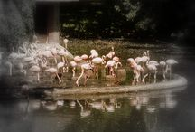 Kohli - Vögel
