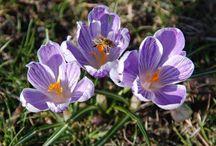 Kwiaty/przyroda