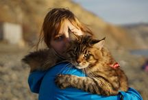 Maine coon cat / Мейнкун по имени Квест
