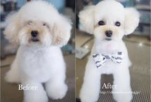 """Before"" & ""After"" Dog Grooming Photos / ""Before"" and ""After"" dog grooming photos"