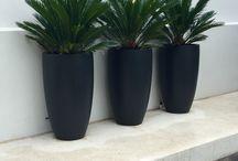 Presentacion de plantas