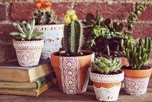 kaktusy, kwiaty we wnętrzach. / Piękne kwiaty w pięknych wnętrzach.