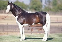 horse coat colors