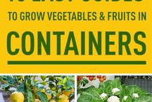 Gardener's Delight: Containers