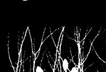 Night Birds / Images that correspond with my novel in progress, The Night Birds