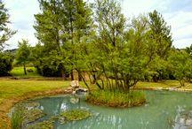 Termální voda / Termální sirná voda Frais Monde