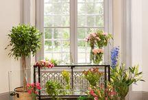 Skyltfönster