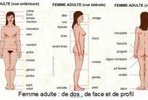 Części ciała po francusku / parties du corps