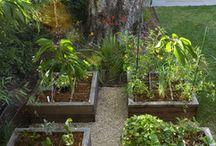 garden / Gardening Tips and Ideas