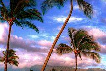 Hawaiian♡Islands / by Becky Gerds