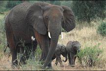 Elephants / by Patti Williams