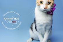 Adoptable Cats in New Jersey and New York / Cats that are up for adoption in the New Jersey and New York area.