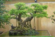 waterbody bonsai