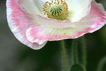 flower foto