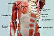 sdmiramar.edu Human Anatomy