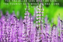 Mid week Travel Pulse. I see purple. Sure to fit the Summer mood. #travel #wanderlust #explore #travelgram #traveler #holiday #purple #flower