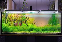 Aquarium inspiration