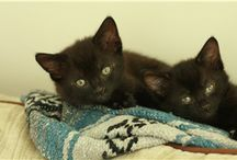 Cats looking for homes / Some of the cats available for rehoming across the UK.
