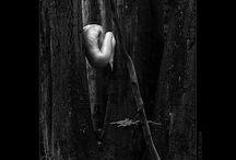 Photos Black & White