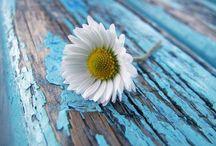 Çiçek fotoğrafçılık