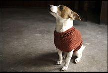 Dog knitting